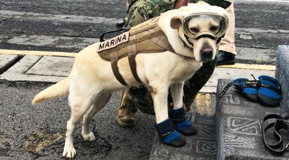 perro-rescatista.jpg